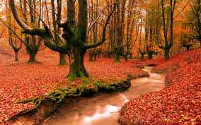 free autumn desktop wallpaper 2560x1600