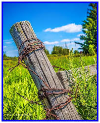 49 Reference Of Steel Fence Posts Barbed Wire Barbed Fence Posts Reference Steel Wire In 2020 Old Fences Barbed Wire Metal Fence Posts