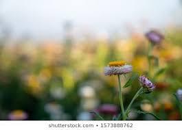 imagenes fotos de stock y vectores sobre images of yellow flowers