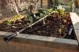 raised garden beds irrigation