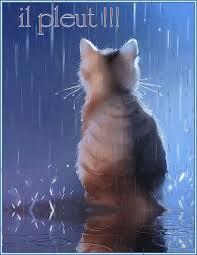 """Résultat de recherche d'images pour """"gif chat pleut"""""""