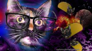 wallpaper hipster cat taco by surlana