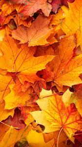autumn wallpaper iphone on wallpaperget