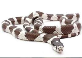 king snake care are they good first pet
