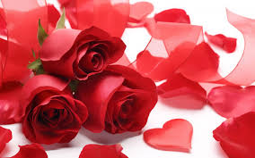 red rose love wallpapers hd wallpaper
