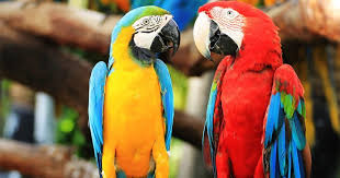 parrots everything you need to know