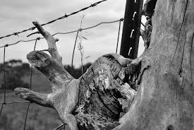 Hd Wallpaper Fence Barbed Wire Tree Trunk Post Black And White Nature Wallpaper Flare