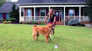 Petsafe Free To Roam Wireless Fence 6 Phase 1 2 Training Your Dog Youtube