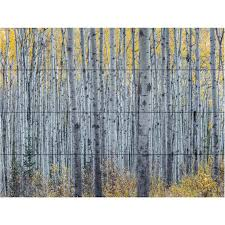 Trademark Fine Art Pierre Leclerc Forest Of Aspen Trees Wood Slat Art Wall Decor Household Shop The Exchange