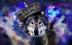 cool blue wolf wallpapers wolf