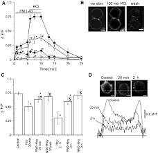 Homocysteine augments BK channel activity and decreases exocytosis of  secretory granules in rat GH3 cells - Gaifullina - 2016 - FEBS Letters -  Wiley Online Library