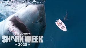 Huge Shark Smacks a Tiny Boat!