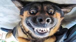 فيديوهات مضحكة للقطط والكلاب لم يسبق له مثيل الصور Tier3 Xyz