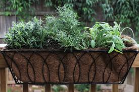 using drought tolerant perennials in
