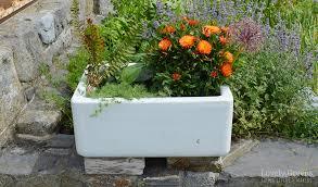 growing veg flowers in vintage sink