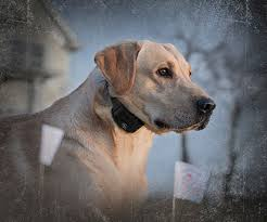 Sportdog Support Product Support Sportdog