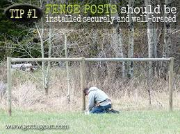 5 Tips For Goat Fencing For Your Miniature Goats Gottagoat