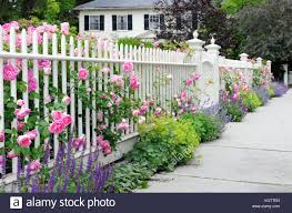 Climbing Roses On Fence And Colorful Garden Border White Picket Stock Photo Alamy