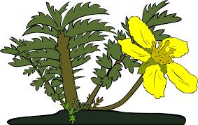 kumpulan kosakata nama tumbuhan tanaman dalam bahasa inggris