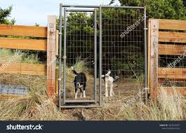 Dogs Looking Out Wire Fence Surrounded Stock Photo Edit Now 1023473077