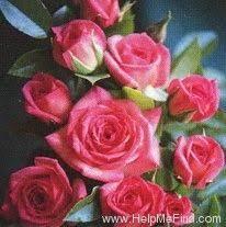 Ada Perry ' Rose Photo | Rose photos, Rose, Beautiful roses