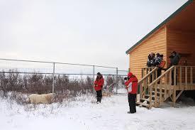Dymond Lake Ecolodge Polar Bears Without The Crowds