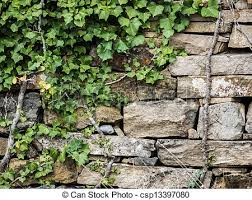 Stone wall with ivy 2. Stone wall with nice texture and ivy.