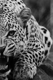 Visita il nostro sito templedusavoir.org) | Animales salvajes ...
