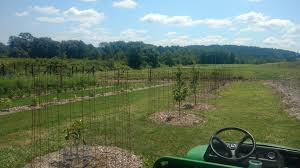 Concrete Remesh Durable And Affordable Trellising And Deer Fencing General Fruit Growing Growing Fruit