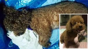 finally singapore dog owner sentenced