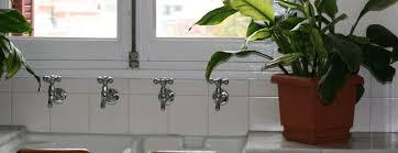 40 best indoor plants for the bathroom