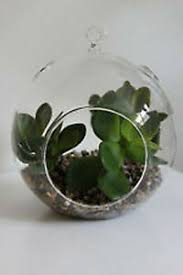5 x 15cm large glass hanging orb round