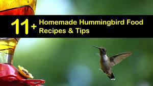 11 diy hummingbird food recipes