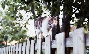 How Can I Stop Other Cats Visiting My Garden Your Cat