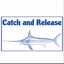 Catch And Release Marlin Sticker U S Custom Stickers