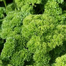Parsley Afro - Pohlmans - Phone 07 5462 0477