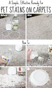 remove a pet stain from carpet