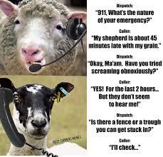 Sheep Call Centre Farming