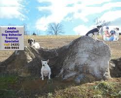 Addie Campbell - Dog Behavior Training Specialist - Call (423) 408 ...