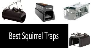 top 5 best squirrel traps in 2020 from
