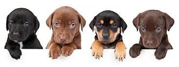 Nombres o apodos para mascotas - Mascotas Foyel
