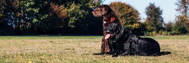 Https Www Dogguard Com Wp Content Uploads 2020 01 Dog Guard Customer Manual Pdf