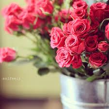 51 Best صور ورد Images Beautiful Flowers Flowers Love Flowers