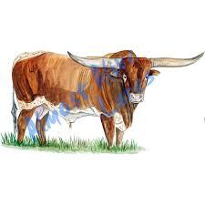Longhorn Bull Farm Cattle Vinyl Decal Sticker For Car Home Truck Suv Atv Rv Ebay