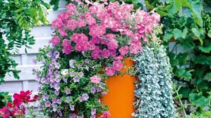 flower combinations in pots