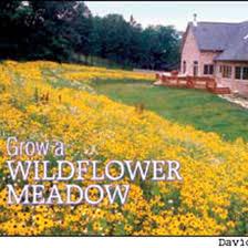 grow a wild flower meadow organic