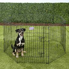 5 Best Portable Dog Fences Reviewed In 2020 Dogstruggles
