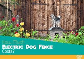 How Much Does A Wireless Invisible Fence Cost Woof Dog