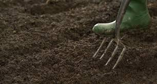 how to prepare your soil for planting