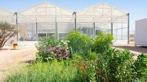 seawater to grow food in the desert
